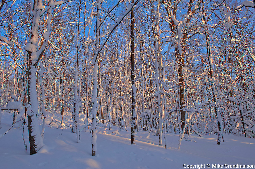Forest after snowfall. Brackenrig Road. Muskoka Country.<br />