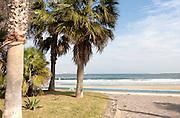 Palm trees sandy beach sea Melilla autonomous city state Spanish territory in north Africa, Spain