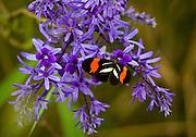Jeceaba_MG, Brasil...Borboleta em uma flor em Jeceaba, Minas Gerais. ..A butterfly on the flower in Jeceaba, Minas Gerais...Foto: JOAO MARCOS ROSA / NITRO