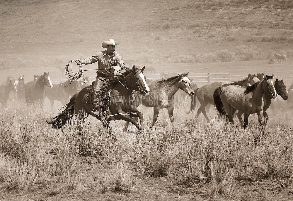 Cowboy herding the horses back to the ranch.