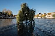France. Paris The Vert galant garden under the water. Seine River floods/ La Seine en crue, le jardin du vert galant sous les eaux