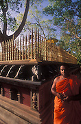 A monks stands beside the golden railing that surrounds the Sacred Bo Tree at Anuradhapura. Grown from a sapling of the original tree in India, it is the oldest documented tree in the world.