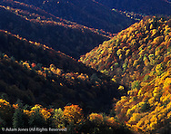 Autumn colors along Deep Creek Valley, Great Smoky Mountains National Park, North Carolina