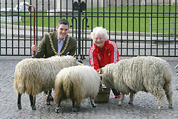 Belfast's Lord Mayor Gavin Robinson, Dame Mary Peters herd Sheep though the front of Belfast's City Hall, early Sunday April 28, 2013. Dame Mary Peter, who won Gold in the 1972 Munich Games will be given of the Freedom of the City of Belfast next month. Mary said 'Sadly it is a myth that being given the Freedom of the City entitles me to graze sheep on the front lawn of City Hall, but that has not stopped us today' Dame Mary joked. These days the title is purely honorary but that does not detract in any way from this being the highest possible civic honour. 'I am absolutely thrilled that this ceremony is being planned for the evening of 8 May and that the daytime will include a packed programme of activity for local young people' Lord Mayor, Alderman Gavin Robinson, paid tribute to Dame Mary and hailed her commitment and dedication as an example to all, Belfast, Northern Ireland, Sunday April 28, 2013. Photo by : Paul McErlane / i-Images
