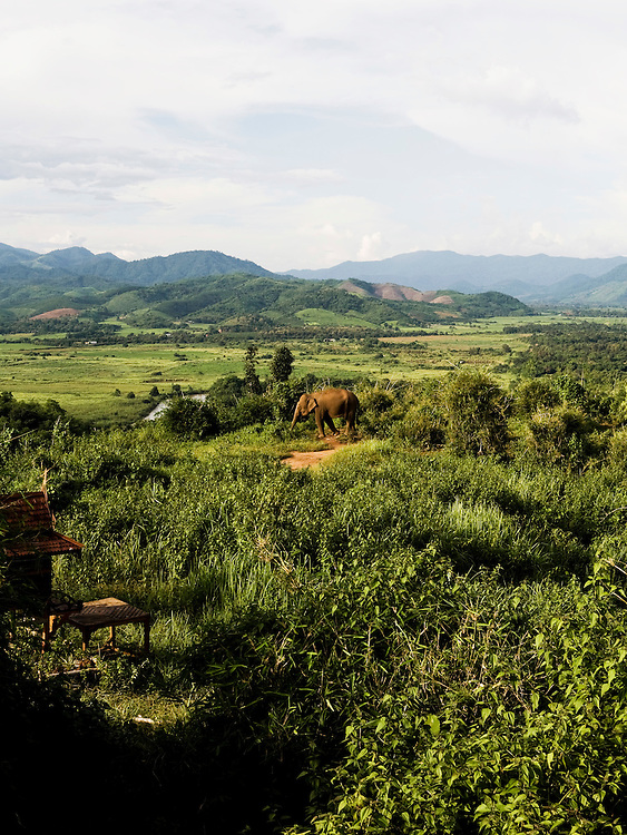 Elephant foraging on Sunset hill with Burma and Laos in the distance.