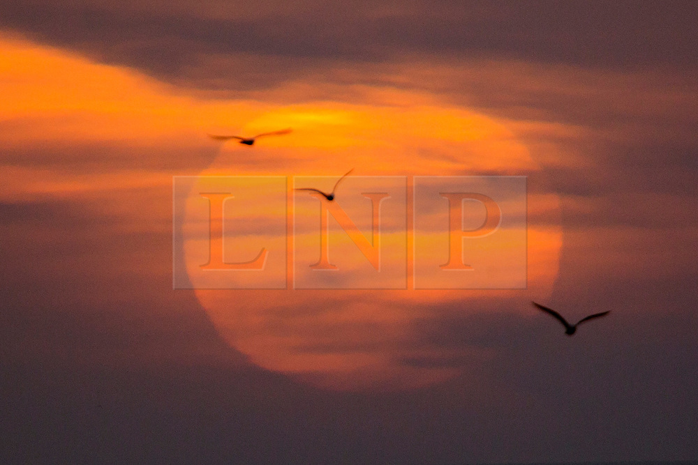 © Licensed to London News Pictures. 15/03/2017. Scarborough UK. Picture shows birds flying in front of the sun at sunrise this morning in Scarborough as the Met office warns of the arrival of storm Stella on Friday. Photo credit: Andrew McCaren/LNP