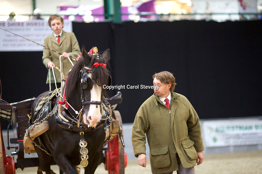 Shire Horse Society Spring Show 2017  Single Agricultural