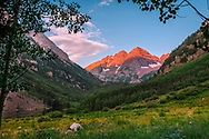 A picture of the Maroon Bells in front of the spring wildflowers.<br />