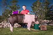 Tate Bauman's 4-H hog in Cheyenne, Wyoming on August 8, 2004.