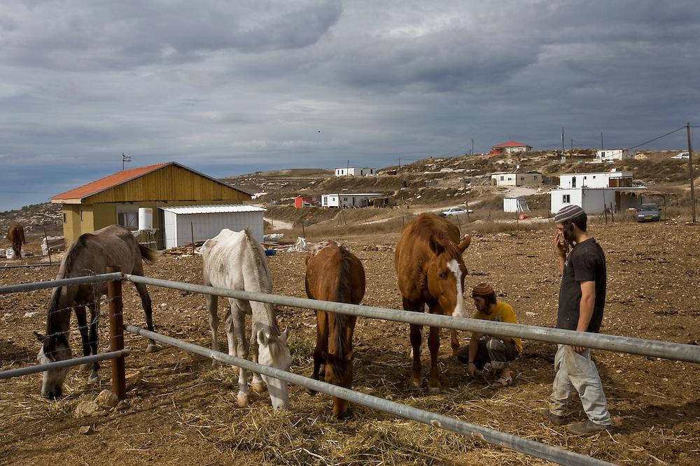 Israeli settlers feed their horses in the settlement of Havat Gilad.
