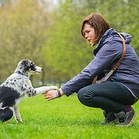 Dog training, giving paw