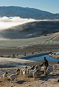 Gareth King, Felton Road Viticulturalis, feeding his goats on a frosty winter day,  Central Otago, New Zealand