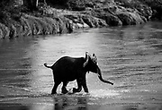 Baby elephant crossing river, Samburu, Kenya, July, 2002