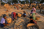 ca. 1990-2000, Mandalay, Burma --- Bonded laborers cut bamboo for government projects. --- Image by © Jeremy Horner/Corbis