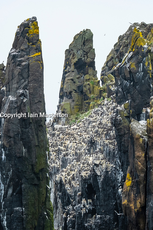 Sea Stacks with nesting birds at Pilgrim's Haven on Isle of May National Nature Reserve, Firth of Forth, Scotland, UK