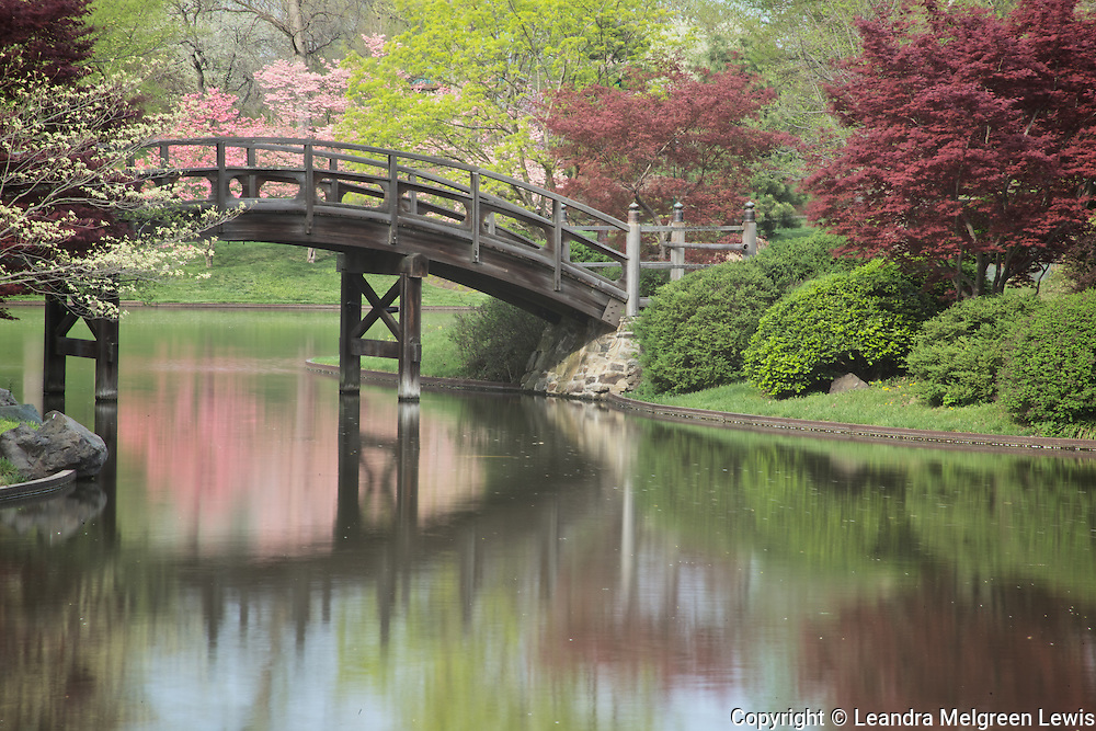 Photograph by Leandra Melgreen Lewis of the bridge over in the Japanese Garden at the Missouri Botanical Gardens in the spring when the cherry trees were in bloom.