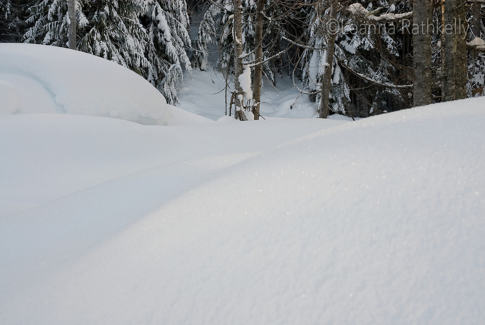 Fresh snow banks at the base of evergreen trees