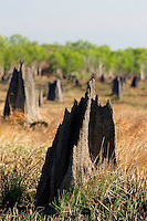 Giant termite mounds dominate the landscape in this part of the Aurukun Wetlands on the West coast of Cape York in far north Queensland, Australia.