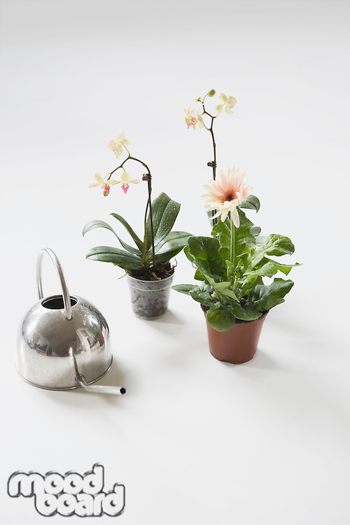 Three potted flowers and watering can on floor