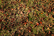 Late Autumn fallen leaves