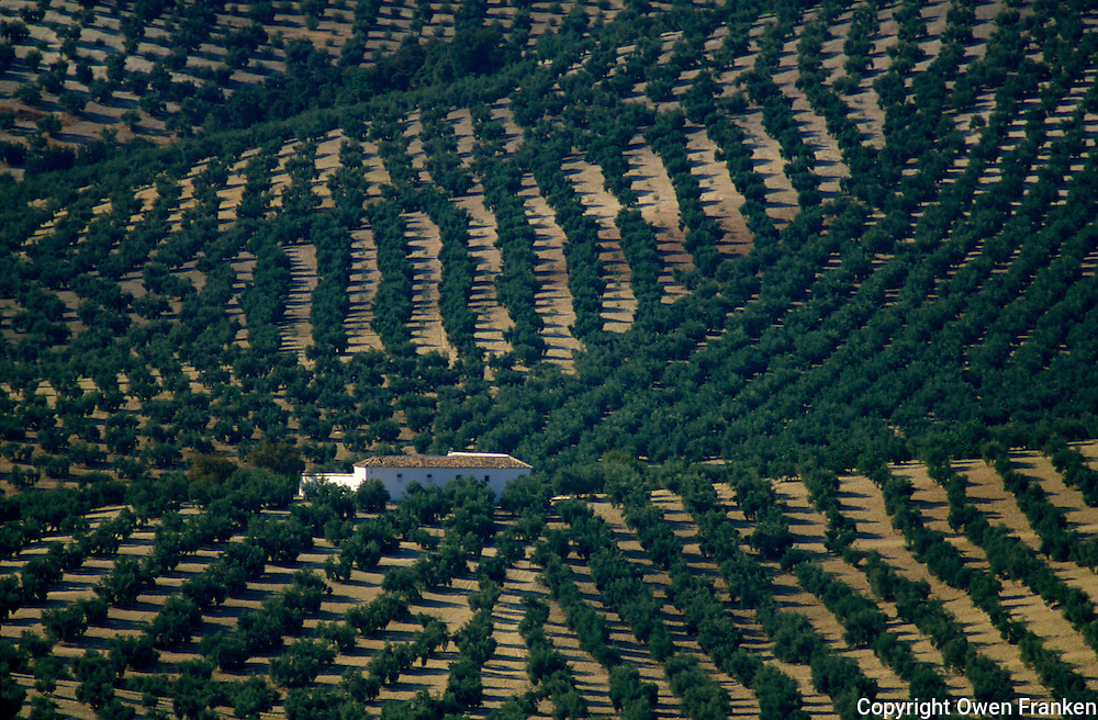 Olive fields in Andalucia, Spain - photograph by Owen Franken