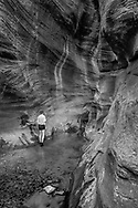 Adult white male examines a narrow section of Orderville Canyon, a sandstone narrows canyon, with a pool of stream water, © 1999 David A. Ponton