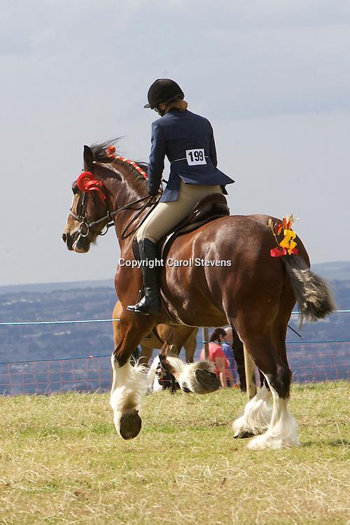 Emley Show 2012  Shire Classes