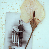 Dried flowerhead of Arum or Calla lily lying on antique paper with sepia photo of boy at stool in Edwardian clothes and lead model of boy