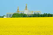 High throuput grain elevator and canola crop, St. Leon, Manitoba, Canada
