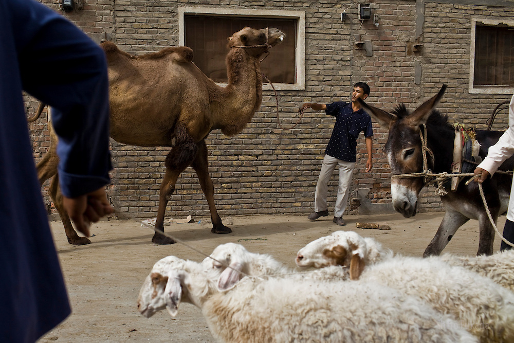 Uyghurs gather at live stock market in Khotan, Xinjiang province in China. Khotan has one of Central Asia's biggest livestock markets, which each Thursday draws farmers and shepherds from across the region.