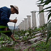 71-year-old Zhou Jiezhong ekes out a living as a new urbanite by growing vegetables under a new bridge on land that has been claimed by the government to build relocation housing project in a southwestern Chinese city.<br /> <br /> He and his neigbours were all moved from their farmland and resettled nearby in a purpose-built estate. <br /> <br /> Some bemoan the poor relocation compensation but others are happy to enjoy a social life away from the burden of farming. <br /> <br /> China is pushing ahead with a dramatic, history-making plan to move 100 million rural residents into towns and cities over the next six years &mdash; but without a clear idea of how to pay for the gargantuan undertaking or whether the farmers involved want to move.<br /> <br /> Moving farmers to urban areas is touted as a way of changing China&rsquo;s economic structure, with growth based on domestic demand for products instead of exporting them. In theory, new urbanites mean vast new opportunities for construction firms, public transportation, utilities and appliance makers, and a break from the cycle of farmers consuming only what they produce.<br /> <br /> Urbanization has already proven to be one of the most wrenching changes in China&rsquo;s 35 years of economic reforms. Land disputes rising from urbanization account for tens of thousands of protests each year.