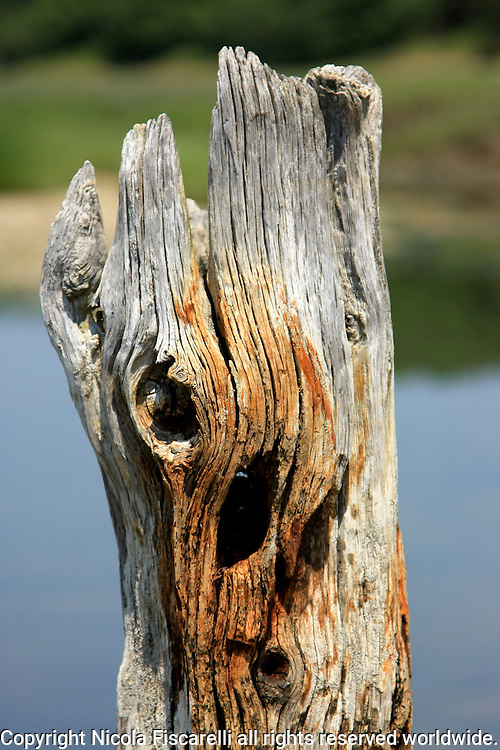 A  close-up of a weathered wooden post in the Cape Cod marsh.