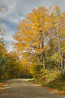 Fall Foliage Green Mountains, Vermont