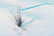 Grasses and snow in winter. Lamar Valley in Yellowstone National Park, Wyoming.