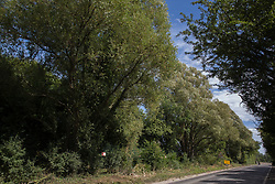 Harefield, UK. 13 July, 2020. Trees alongside Harvil Road in the Colne Valley which are expected to be cleared for the HS2 high-speed rail link. Thousands of trees have already been felled for the project in the Colne Valley.