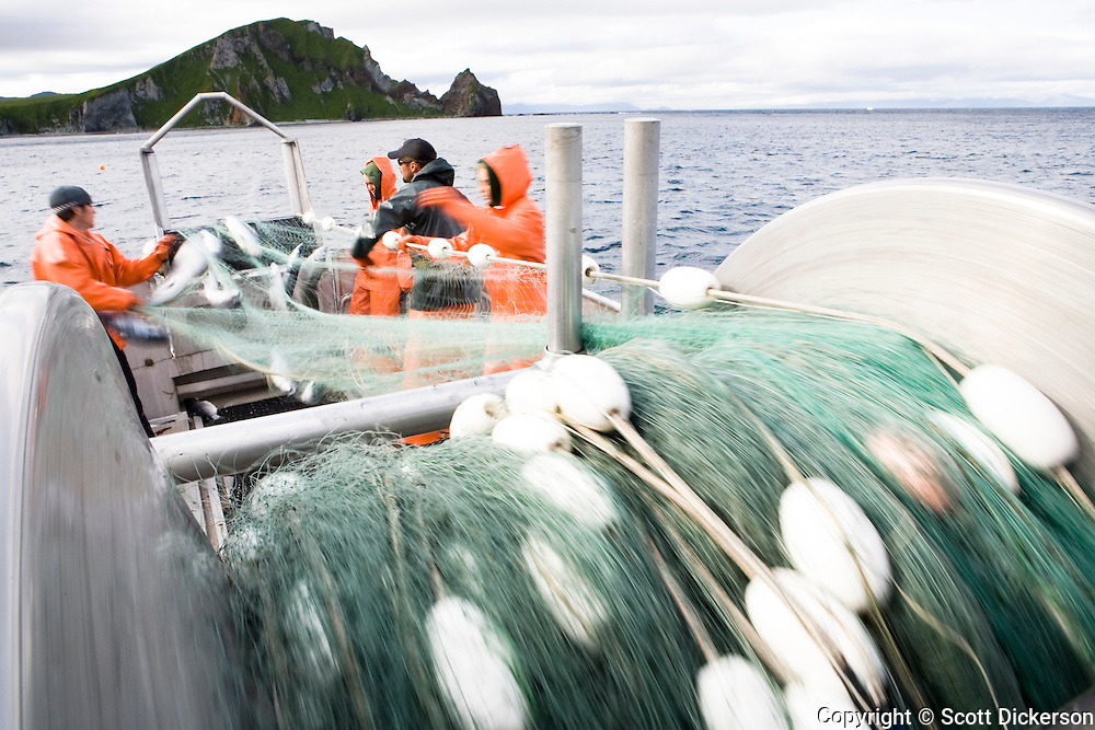 The crew pick fish from the gillnet while commercial sockeye salmon fishing in the Eastern Aleutian Islands, area M, region aboard the F/V Lucky Dove. Motion blur