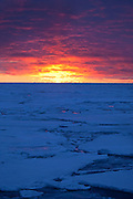 "Sunset on Arctic Sea Ice, Fram Strait, between Greenland and Svalbard, September 2009. In August 2012, Arctic sea ice hit a record minimum - this will affect weather and the global climate, as the ice cap reflects much of the sun's solar energy back into to space. With sea ice melting away, the dark water below absorbs more solar energy, which in turn causes more melting. This mage can be licensed via Millennium Images. Contact me for more details, or email mail@milim.com For prints, contact me, or click ""add to cart"" to some standard print options."