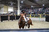 WRHR 18 Horse Sale