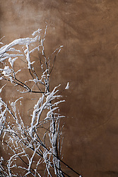 snow covered branches against an adobe wall in New Mexico