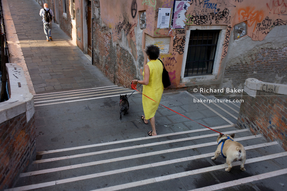 A dog owner and her two pet pugs with coloured leads who refuse to go any futher while crossing a small bridge over a narrow canal in Dorsoduro, a district in Venice, Italy.