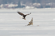 Onondaga lake Bald Eagles