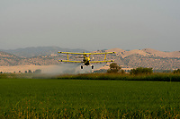 Weedy Rice demo, Tuesday, August 1, 2017.<br /> Photo Brian Baer