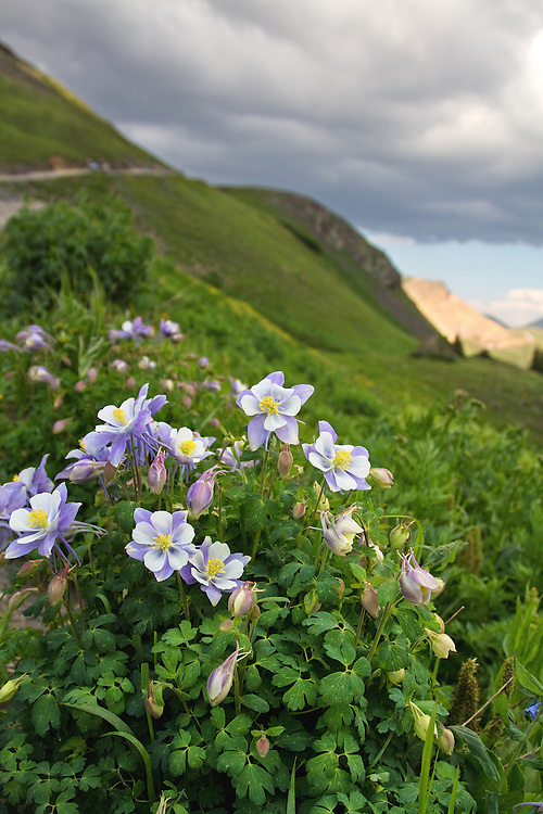 Big Bear Pass is located in the San Juan Mountains between Ouray and Silverton, Colorado. <br />
