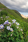 Big Bear Pass is located in the San Juan Mountains between Ouray and Silverton, Colorado. <br /> <br /> Colorado's state flower, the white and lavender columbine (Aquilegia caerulea) is commonly known as the Rocky Mountain columbine.