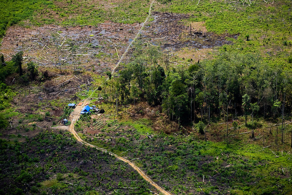 Peat land forest and destruction in Kerumutan region, Sumatra, Indonesia, Aug. 30, 2008..Daniel Beltra/Greenpeace