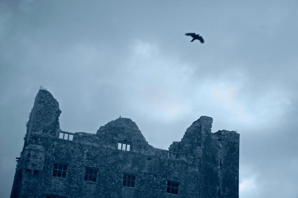 Crow (Corvus corone) and Ruin, Burren, Ireland