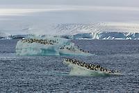 Adelie Penguins (Pygoscelis adeliae) on icebergs in the Weddell Sea.
