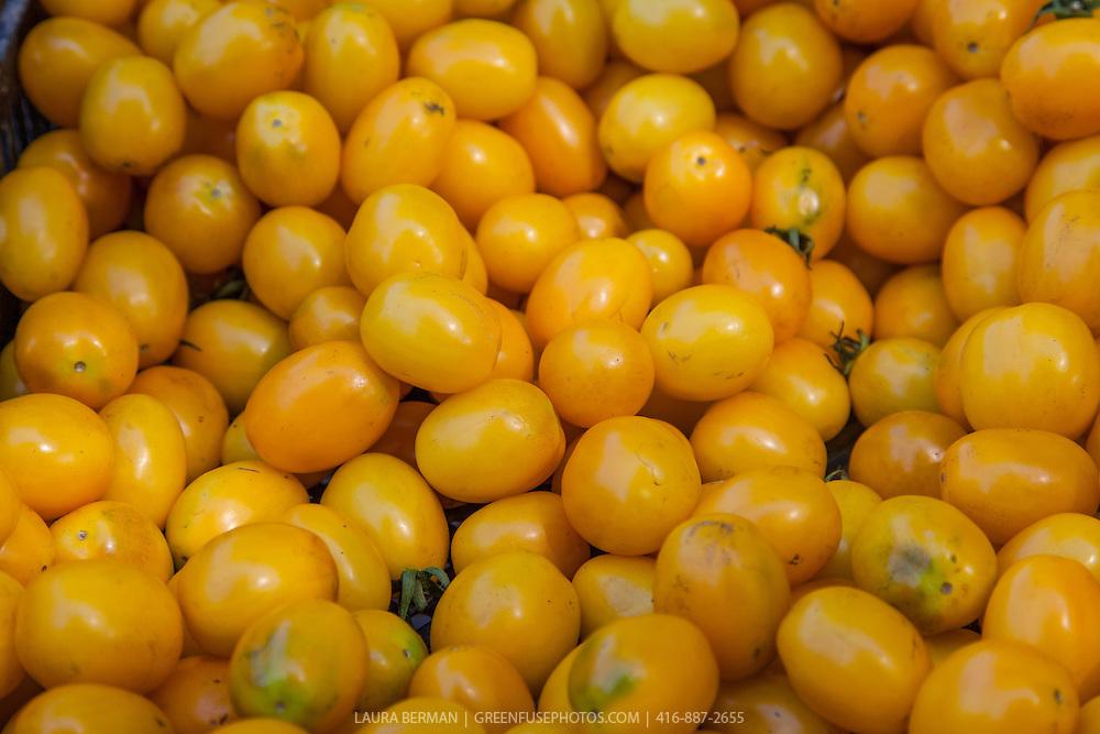 'Golden Egg' heirloom tomatoes