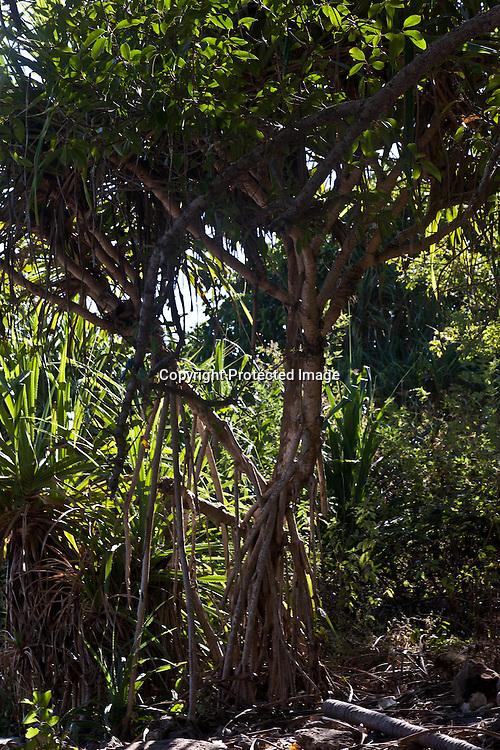 Indonesia, Lombok archipelago, Moyo island, rain forest