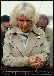 The Duchess of Cornwall holds a baby chick during a tour of The Young Farmers tent at the Royal Bath & West Show, Royal Bath & West Showground, Shepton Mallet, Somerset, United Kingdom, Wednesday, 28th May 2014. Picture by Andrew Parsons / i-Images